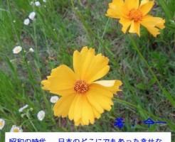 somato_cover_2